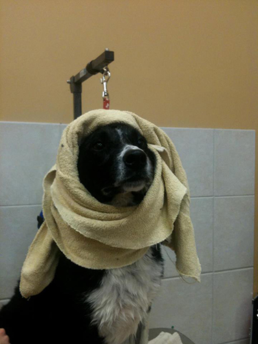 Shampooches Dog Grooming Spa in West End, Edmonton
